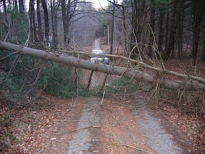 Tree over road