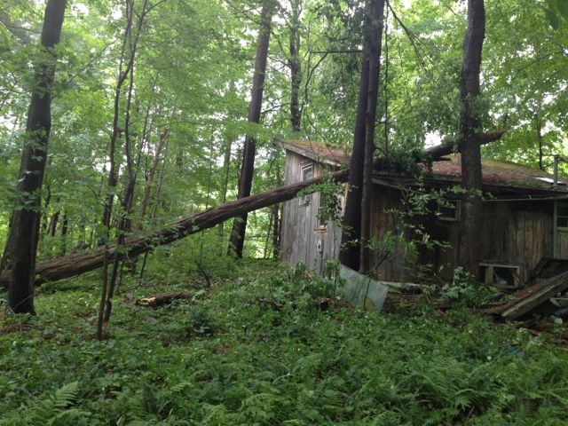 treefallsonhouse-05.jpg